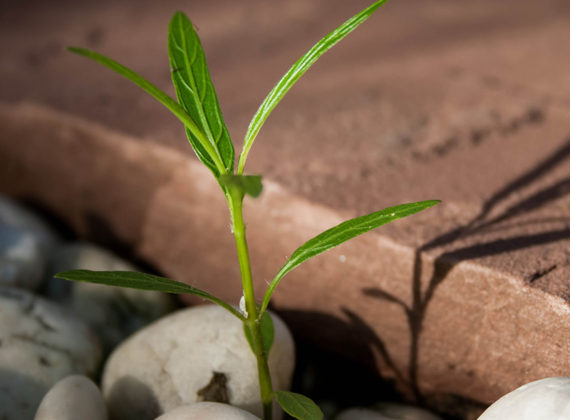 5 Reasons Church Planting Should Matter to You